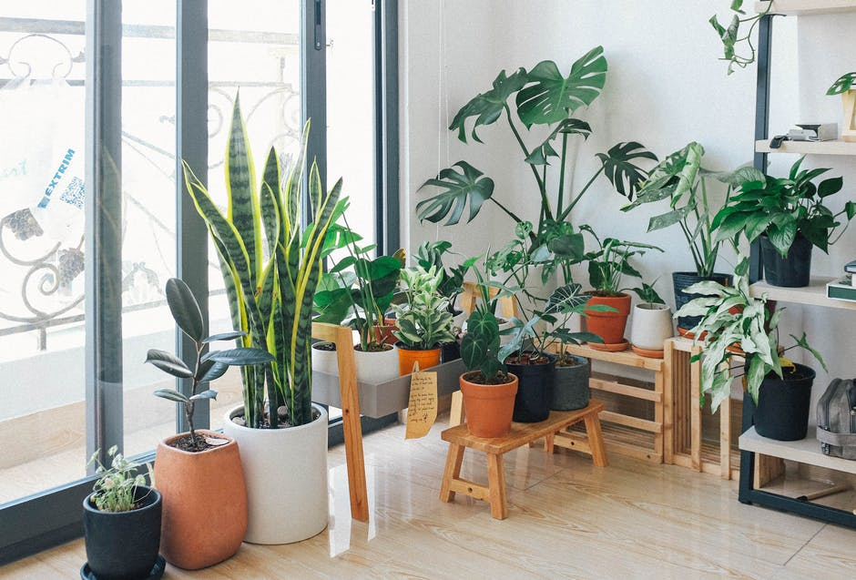 A room filled with furniture and a plant